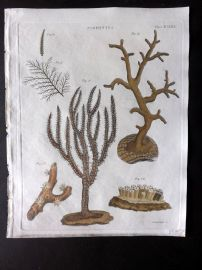 Encyclopedia Britannica 1801 Hand Col Print. Zoophytes. Coral 580